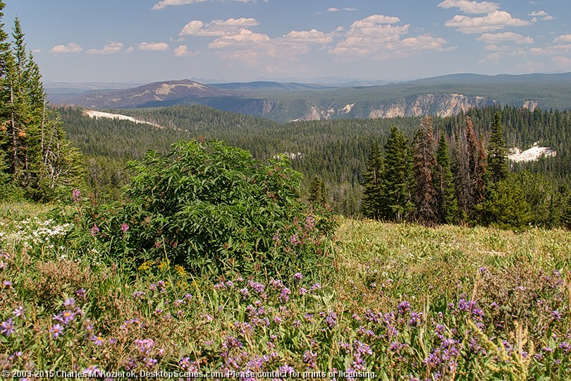 Yellowstone Caldera Rim from Dunraven Pass